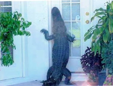 Gator at the Door