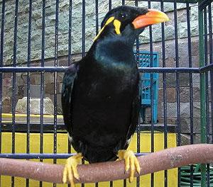 14++ Gambar hewan peliharaan burung beo terbaru