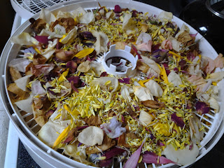Pedals in the dehydrator.  Step 3:  Spread out the pedals on the dehydrator trays. Fill the tray so that there's ample overlap.