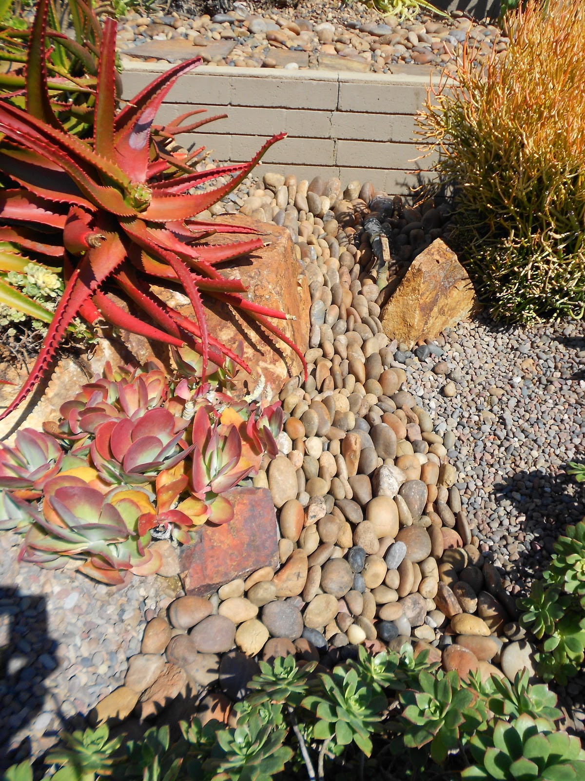 The Use Of Colorful Beach Pebble Gravels And Succulents To Create This Kind Movement Can Be Re Created For Your Rock Garden Gorgeous