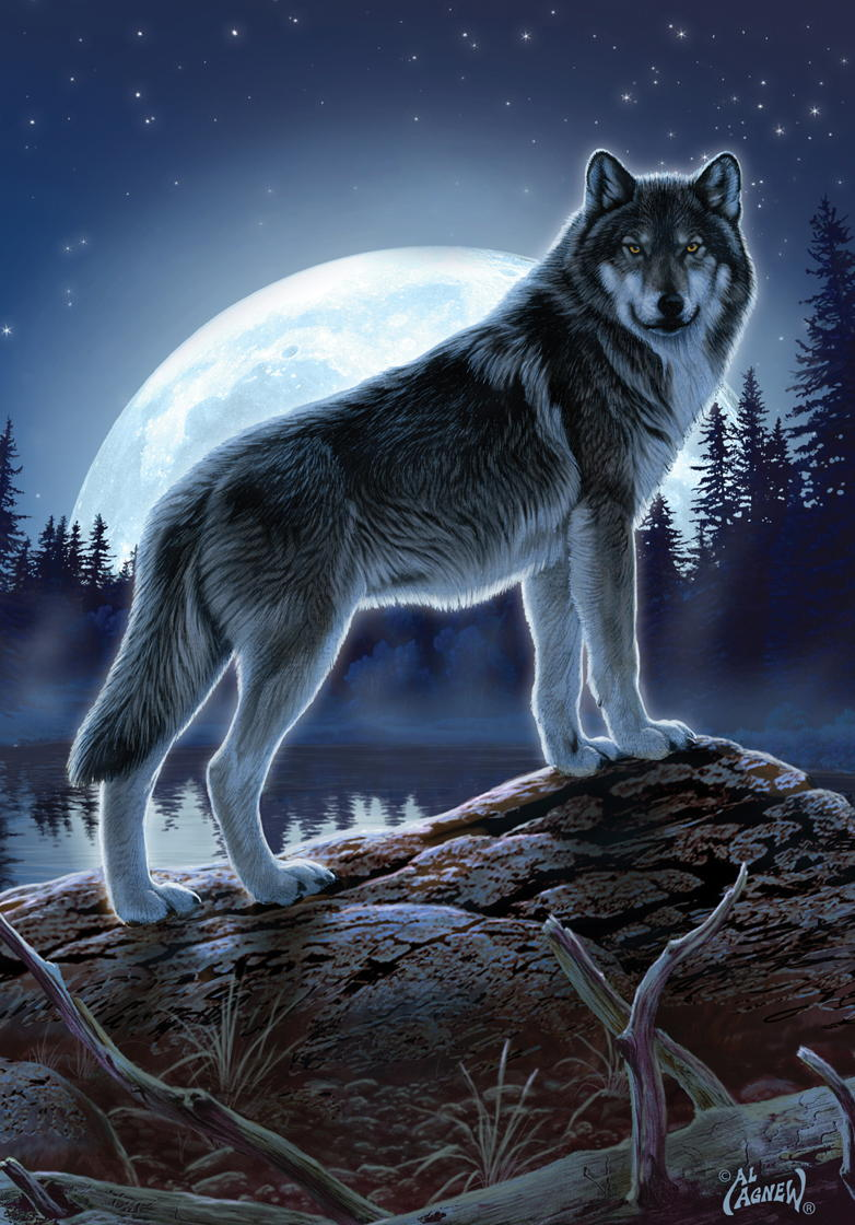how to become a wolf shapeshifter