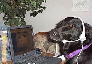 smešna slika: Pas sa slušalicama sedi iza laptopa