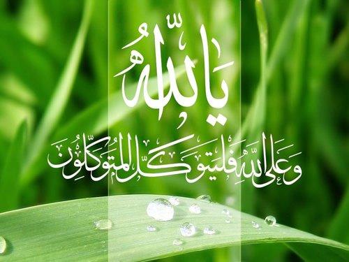 اللون الأخضر في القرآن 545070_1015094212482