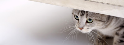 Facebook Timeline Cover Of Shy Cat.