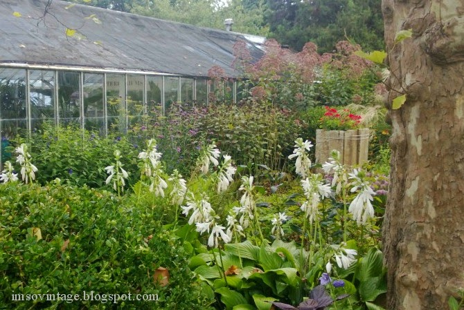 gardening perennial flowers greenhouse