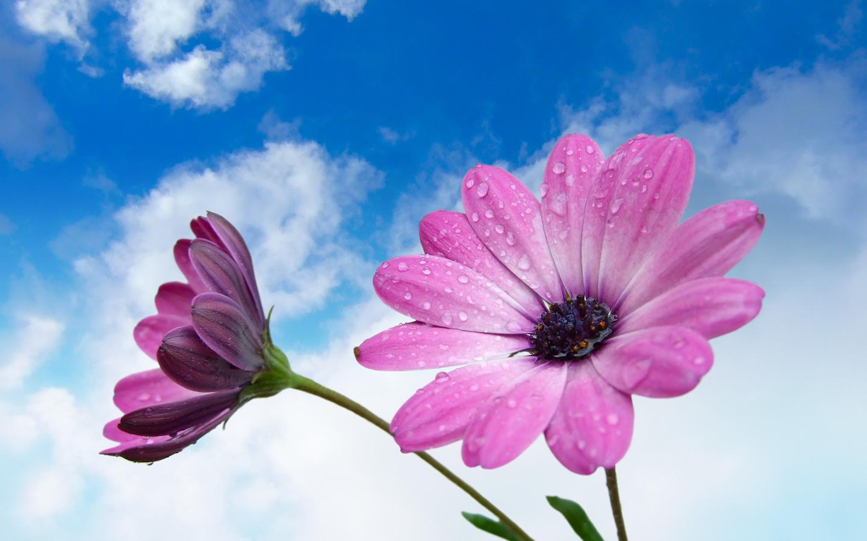 photography flowers wallpaper flower photos