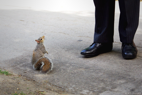 aliciasivert, alicia sivertsson, london, england, Squirrel, feet, ekorre, fötter