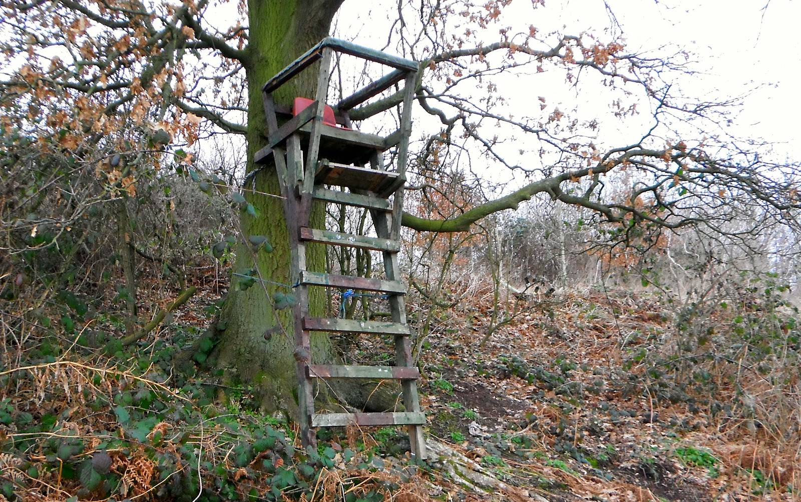 Viewing platform in the Bass Millennium Wood, on Battlestead Hill