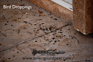 Bird droppings can carry disease.