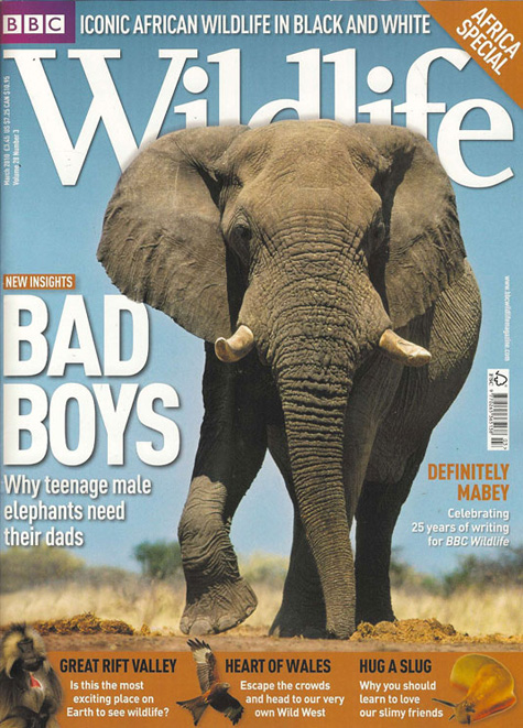 BBC Wildlife Elephant Cover