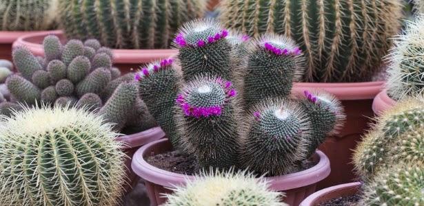 Suculenta é a planta da vez na decoração