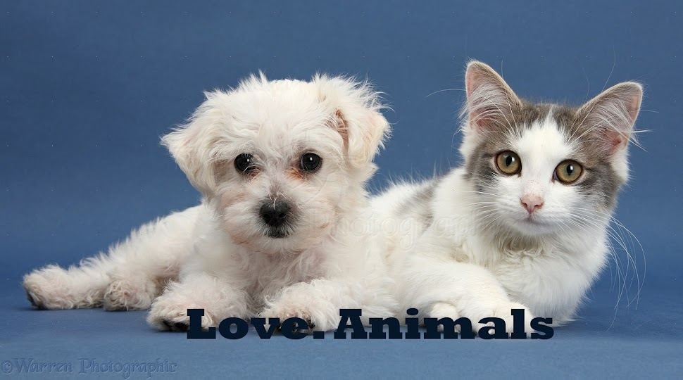 Love.Animals