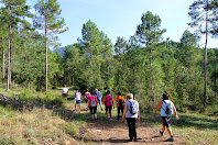 Caminant entre les pinedes de les Roques del Forn