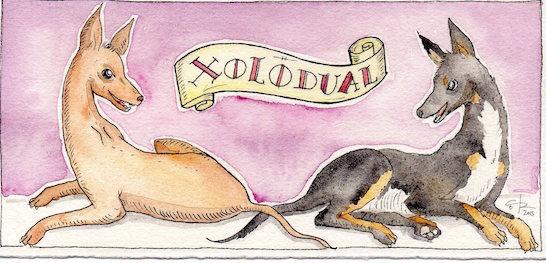 XOLODual