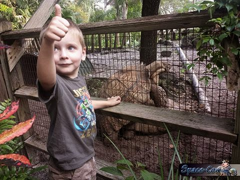 funny kid zoo picture