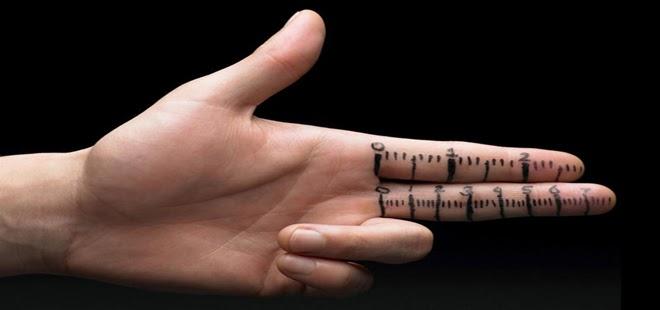 CUAL ES LA POSICION ANATOMICA DEL PENE? – Blog de Fisioterapia