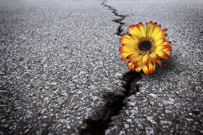 hope, excitement, happiness, growth, change, flower, asphalt, new things, potential, perseverance, persistence
