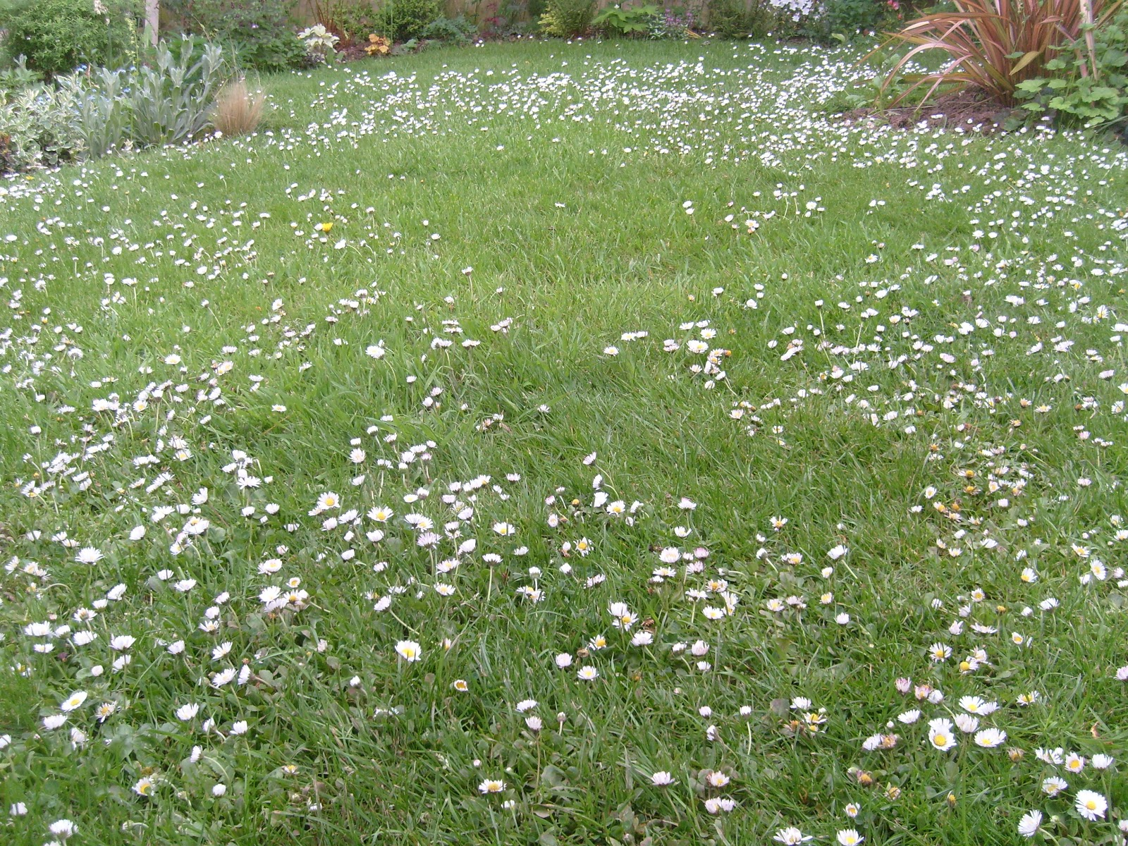 Green earth almanac put a little life in your lawn a mixed lawn will attract all kinds of life to your yard from insects like butterflies and bees feeding on the abundant nectar of flowering lawn plants to mightylinksfo