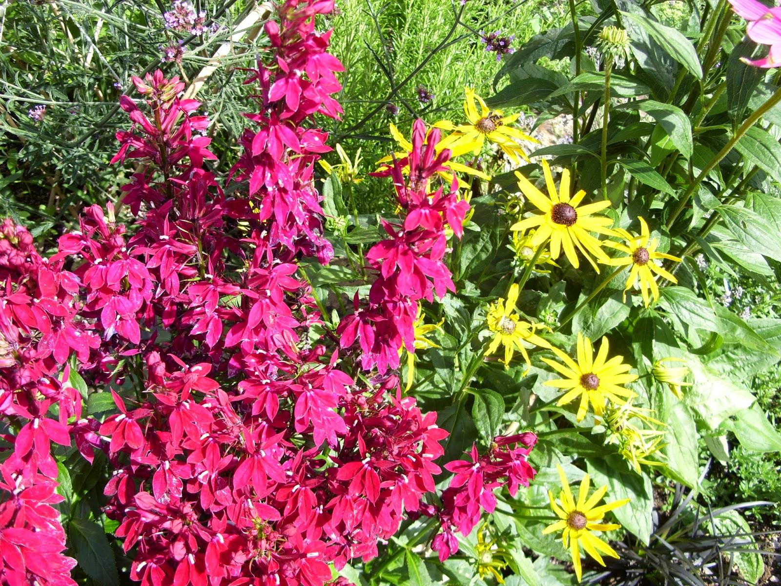Kelli s Northern Ireland Garden August Flowers Blogger s Bloom Day