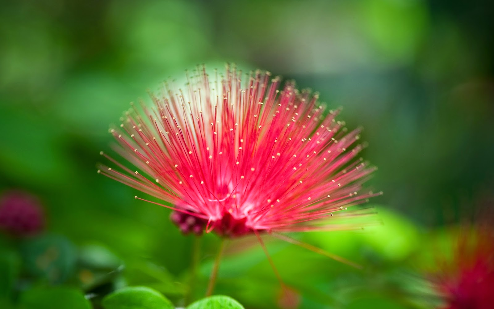 Beautiful Nature Flowers Wallpapers | Wallpapers Gallery