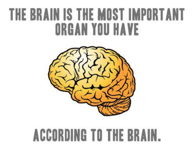 funny, brain