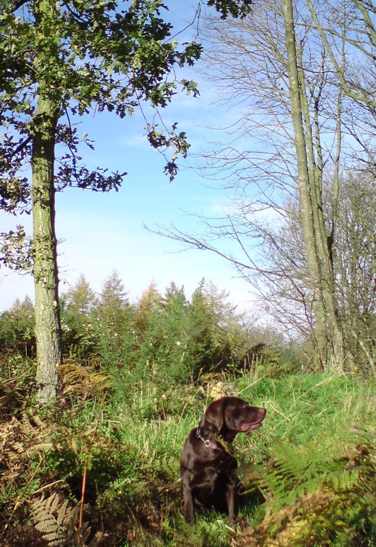 Dog Walking Ash Vale Hants