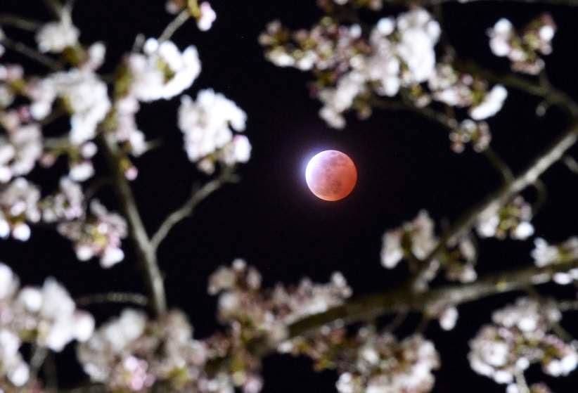 White wolf full blood moon 2015 stargazers enjoy lunar eclipse and
