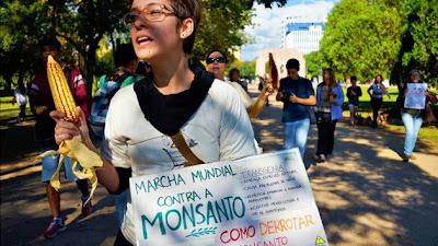 América Latina se une al clamor internacional contra Monsanto