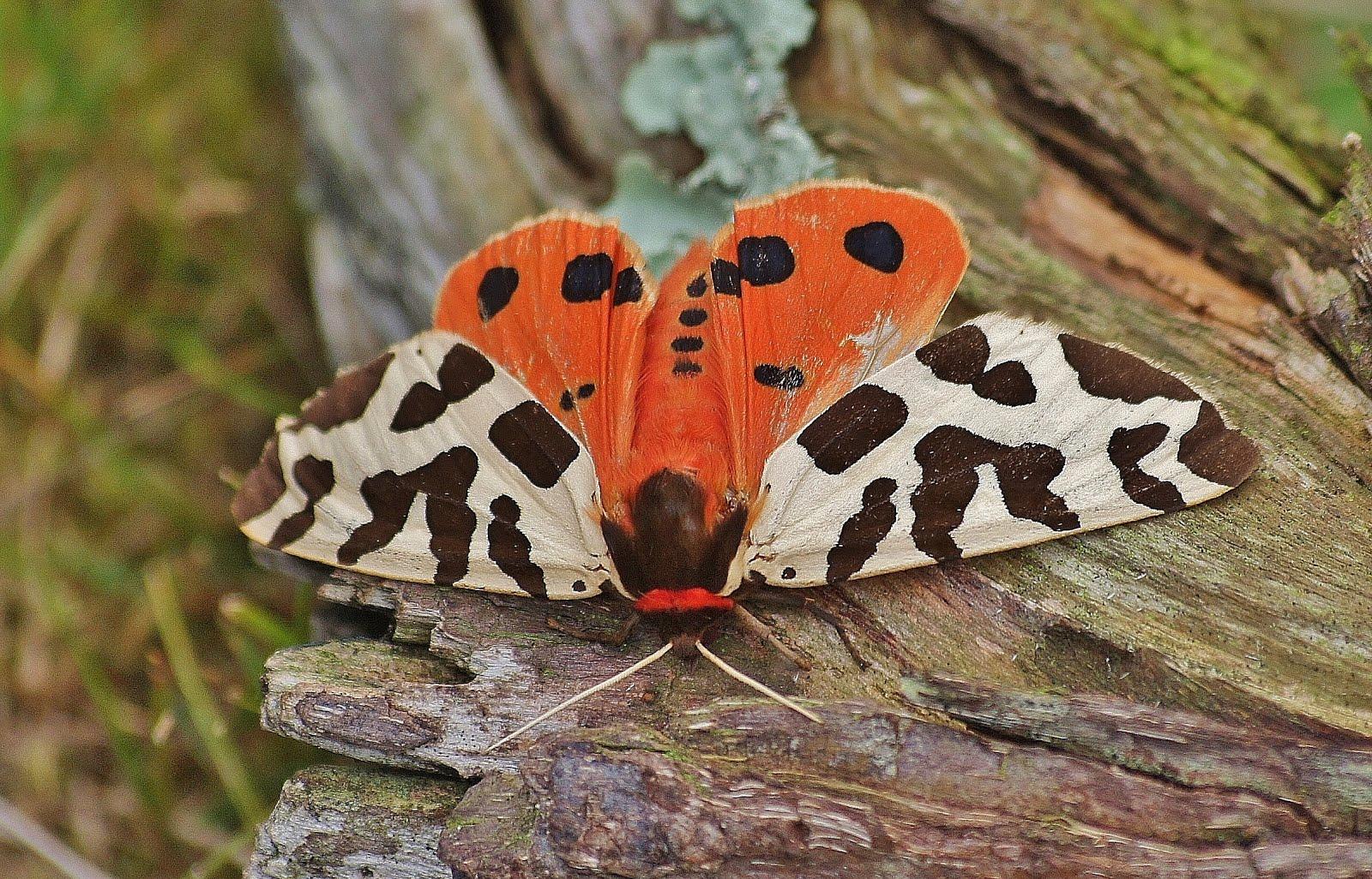 Mooiste Vlinders - H.B