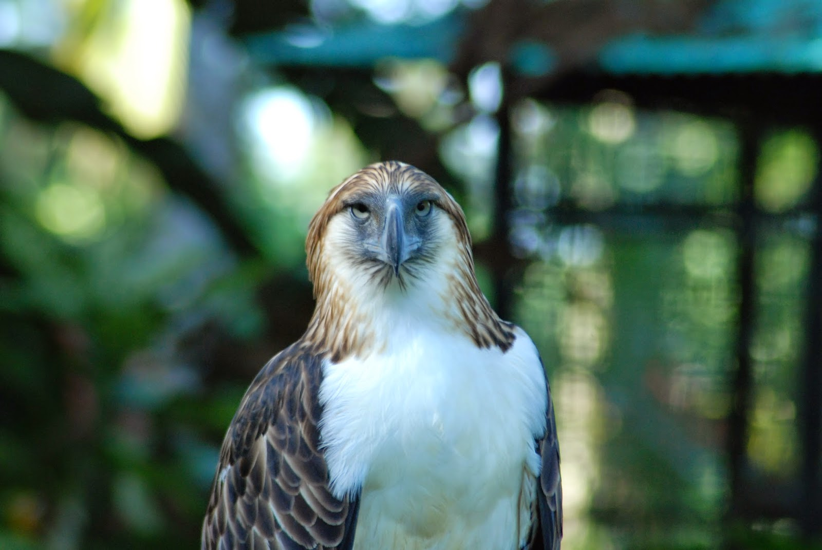 http://mytravel-asia.com/pois/102875-Philippine-Eagle-Center