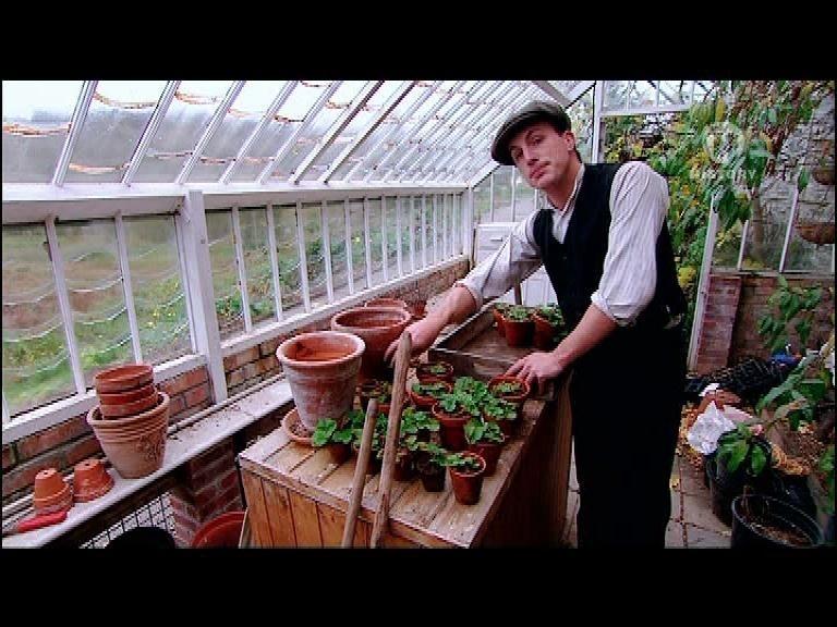 Выращивание клубники в фермерских 481