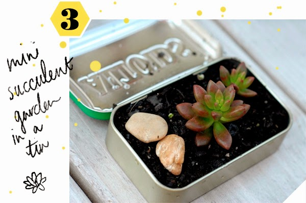 DIY Mini Succulent Gardens - in an old tin!
