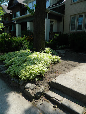 Leslieville front garden clean up after  Paul Jung Gardening Services Toronto