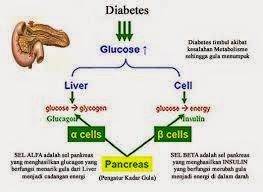terjadinya penyakit kencing manis