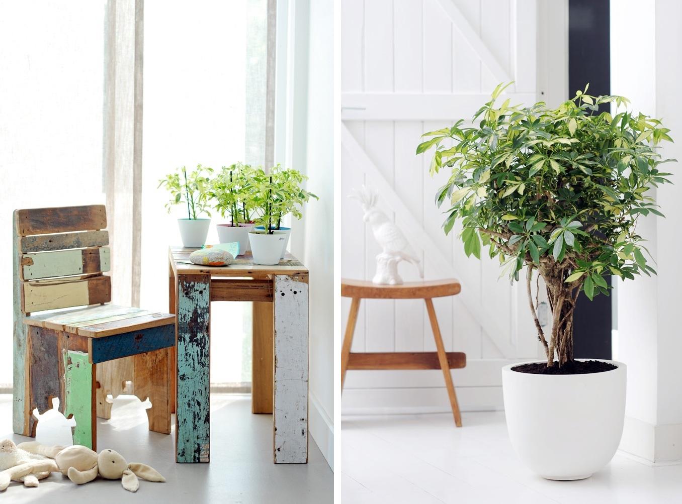 Woonkamer decor planten - Kleine woonkamer decoratie ...