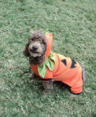 results from dog halloween costume contest