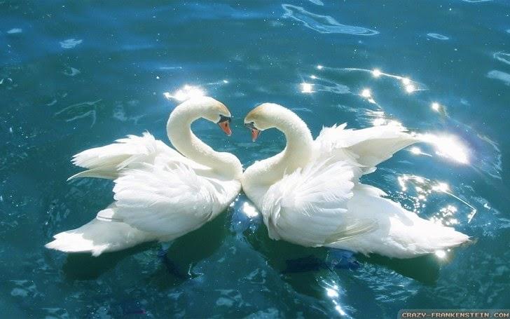 bird-love-wallpaper-728x455