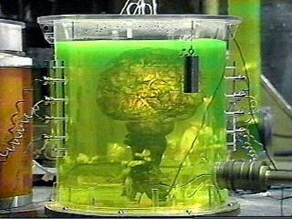 Brain of Morbius