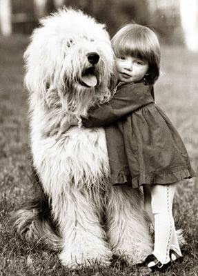 Old English Sheepdog hug. Fluffiness