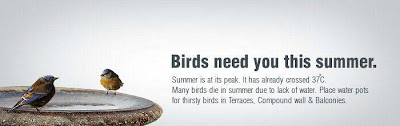 Birds needs you this summer