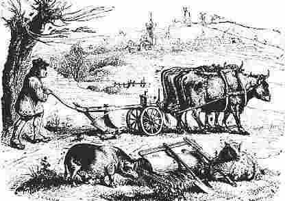 la agricultura industrial: