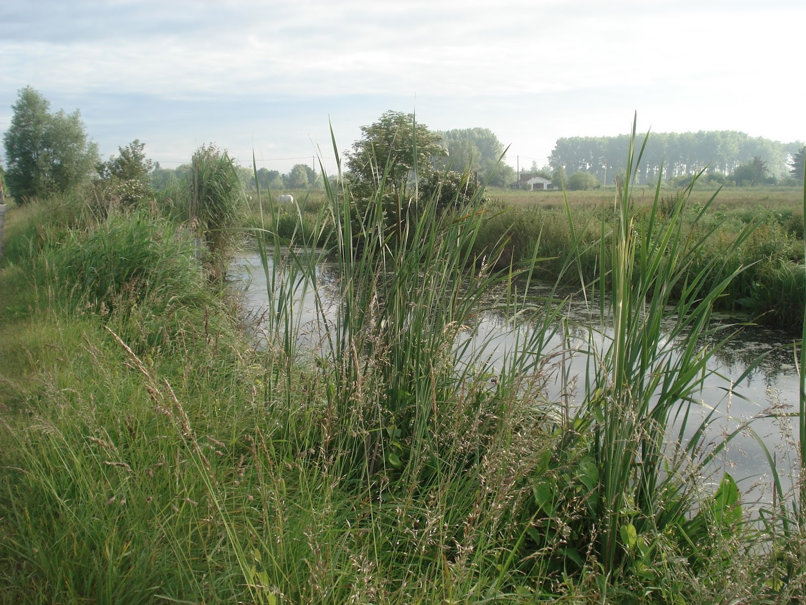 Marais Audomarois