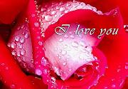 . amor amor imagen