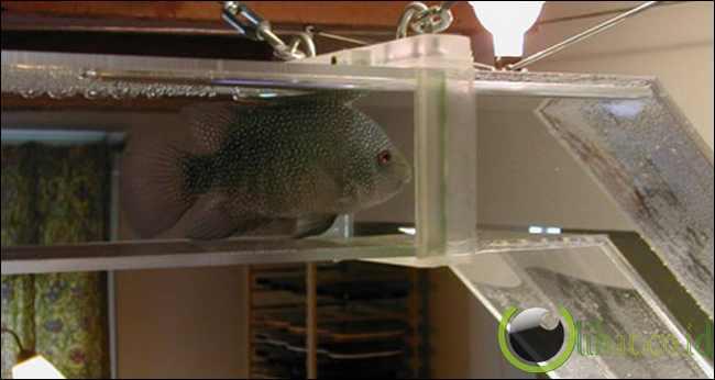 Aquarium pipa kaca