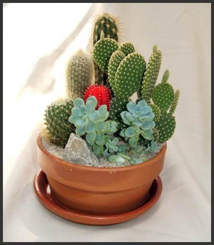 Garden Design Beautiful Cactus Ideas for ones Garden