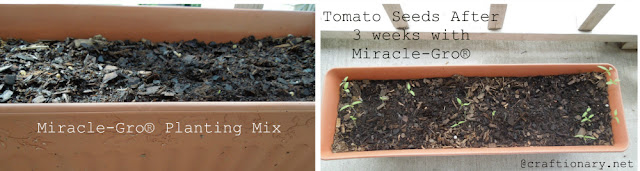 Growing Roma Tomatoes using Miracle-Gro Planting Mix