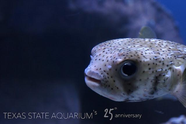 Texas State Aquarium 25th anniversary - Visit Corpus Christi