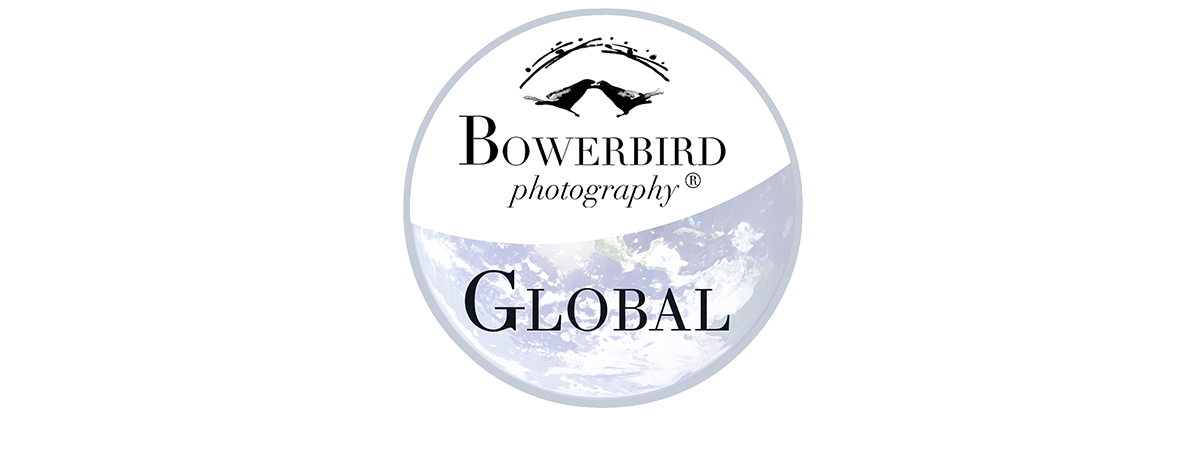 Bowerbird Global
