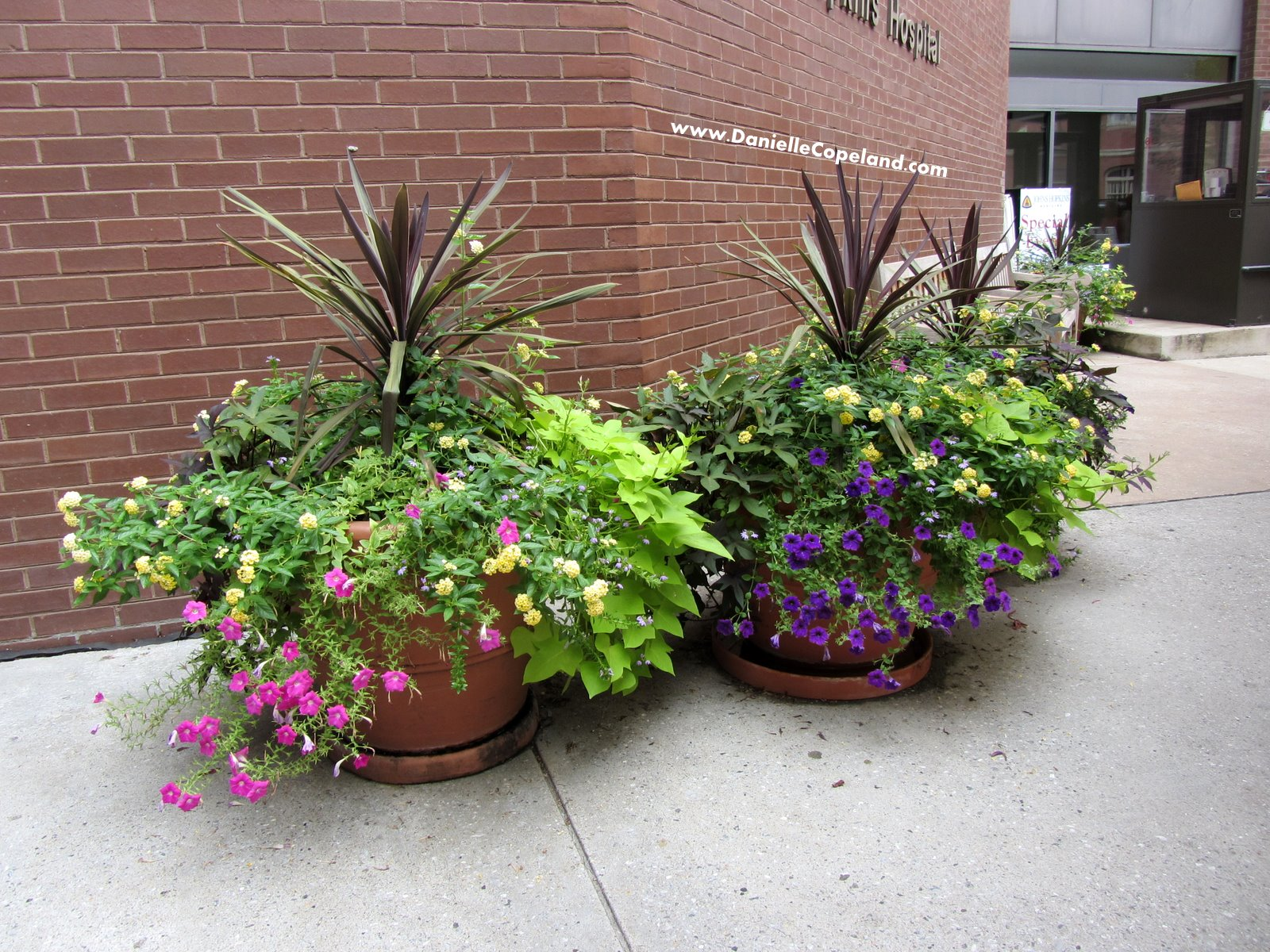 Potted outdoor plants full sun bing images - Container gardens for sun ...