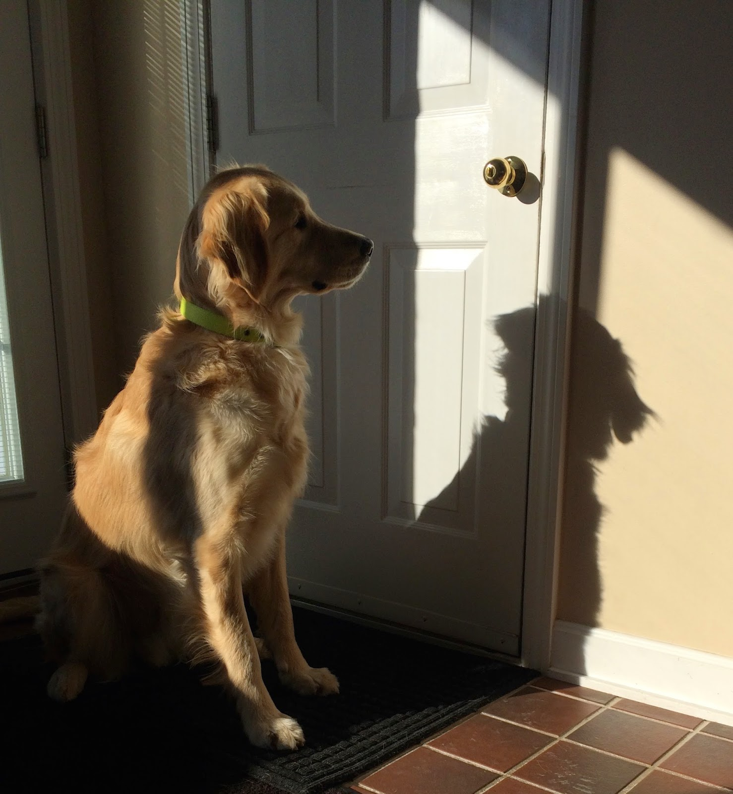 dog looking at his shadow